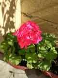 Δέσμη των λουλουδιών Στοκ φωτογραφία με δικαίωμα ελεύθερης χρήσης