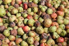 Δέσμη των μήλων Στοκ εικόνα με δικαίωμα ελεύθερης χρήσης