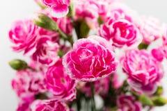 Δέσμη των μικρών ρόδινων τριαντάφυλλων Στοκ Εικόνα