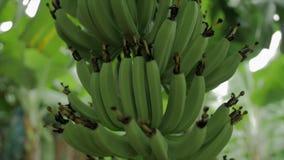 Δέσμη των μπανανών και του λουλουδιού απεικόνιση αποθεμάτων