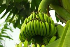 Δέσμη των μπανανών Στοκ Φωτογραφίες