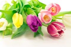 Δέσμη των λουλουδιών τουλιπών στοκ εικόνες με δικαίωμα ελεύθερης χρήσης