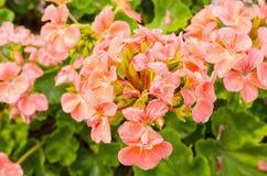 Δέσμη των λουλουδιών Στοκ εικόνες με δικαίωμα ελεύθερης χρήσης