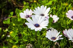 Δέσμη των λουλουδιών Στοκ Εικόνα