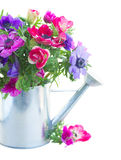 Δέσμη των λουλουδιών anemone Στοκ Εικόνες