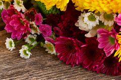 Δέσμη των λουλουδιών mum Στοκ φωτογραφίες με δικαίωμα ελεύθερης χρήσης