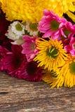 Δέσμη των λουλουδιών mum Στοκ Φωτογραφία