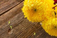 Δέσμη των λουλουδιών mum Στοκ Φωτογραφίες