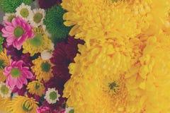 Δέσμη των λουλουδιών mum Στοκ Εικόνες