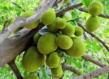Δέσμη των φρούτων του Jack Στοκ εικόνα με δικαίωμα ελεύθερης χρήσης