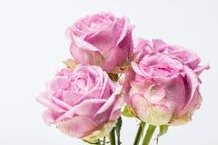 Δέσμη των όμορφων πορφυρών τριαντάφυλλων Στοκ εικόνες με δικαίωμα ελεύθερης χρήσης