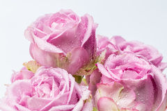 Δέσμη των όμορφων πορφυρών τριαντάφυλλων Στοκ Φωτογραφίες
