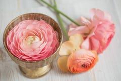 Δέσμη χλωμού - ρόδινο ελαφρύ υπόβαθρο νεραγκουλών βατραχίων περσικό, ξύλινη επιφάνεια απομονωμένο γυαλί vase λευκό Στοκ φωτογραφία με δικαίωμα ελεύθερης χρήσης