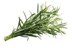 Δέσμη Artemisia τραχουριού του dracunculus, πορείες Στοκ Εικόνες