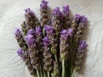 δέσμη lavender των λουλουδιών και του άσπρου υποβάθρου Στοκ Φωτογραφίες