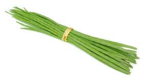 Δέσμη Moringa Oleifera στοκ φωτογραφία με δικαίωμα ελεύθερης χρήσης