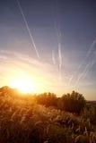 Δέσμη SEDGE ΑΜΜΟΥ των εγκαταστάσεων χλόης Carex στο ηλιοβασίλεμα Στοκ φωτογραφία με δικαίωμα ελεύθερης χρήσης
