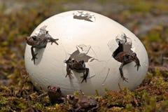 Δέστε το βάτραχο, παιδιά arvalis Rana Στοκ εικόνα με δικαίωμα ελεύθερης χρήσης