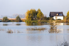 Δέλτα ποταμών secene Στοκ Εικόνες