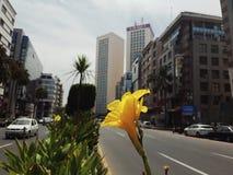 Δίδυμο κέντρο της Καζαμπλάνκα, Μαρόκο Στοκ φωτογραφία με δικαίωμα ελεύθερης χρήσης