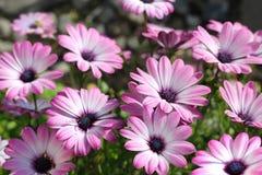 Δίδυμο λιβάδι λουλουδιών Στοκ Φωτογραφίες