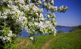 δίκαιος καιρός δέντρων χρώ&mu Στοκ φωτογραφίες με δικαίωμα ελεύθερης χρήσης
