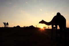δίκαιος pushkar στοκ φωτογραφία με δικαίωμα ελεύθερης χρήσης