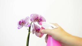 Δίνει το ψεκάζοντας λουλούδι απόθεμα βίντεο