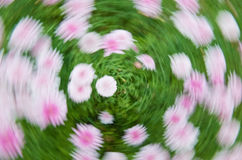 δίνη λουλουδιών Στοκ φωτογραφία με δικαίωμα ελεύθερης χρήσης