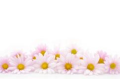 Δίπλα-δίπλα λουλούδια Στοκ Φωτογραφία