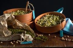 Δίσκοι για τη βλάστηση του σιταριού Στοκ φωτογραφίες με δικαίωμα ελεύθερης χρήσης