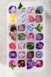 Δίσκος με τα παγωμένα λουλούδια στους κύβους πάγου στοκ φωτογραφίες