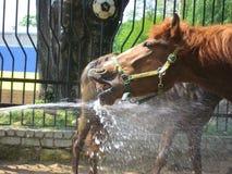 δίψα αλόγων στοκ φωτογραφία με δικαίωμα ελεύθερης χρήσης