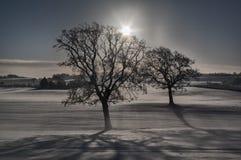 Δίδυμα δέντρα Στοκ Εικόνα