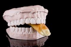 δαγκώνοντας ανθρώπινα δόντ στοκ εικόνες