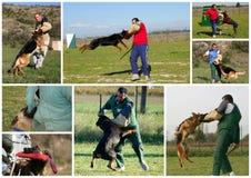 δαγκώνοντας σκυλί στοκ φωτογραφίες