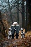 Δαλματικά σκυλιά πορτρέτου κοριτσιών διδύμων στοκ εικόνες