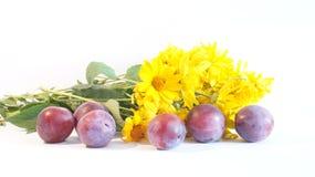 Δαμάσκηνα με τα λουλούδια Στοκ εικόνα με δικαίωμα ελεύθερης χρήσης