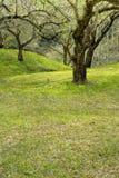 δαμάσκηνο κήπων ανθών στοκ φωτογραφία με δικαίωμα ελεύθερης χρήσης