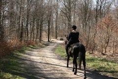 δανικά άλογα Στοκ Εικόνες