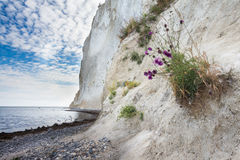 Δανική ακτή με το τουριστικό αξιοθέατο οι άσπροι απότομοι βράχοι Στοκ Εικόνα