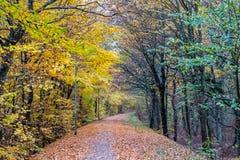 Δανικό δάσος φθινοπώρου το Νοέμβριο Viborg, Δανία Στοκ Εικόνα