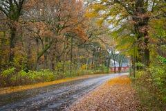 Δανικό δάσος φθινοπώρου το Νοέμβριο Viborg, Δανία Στοκ Εικόνες