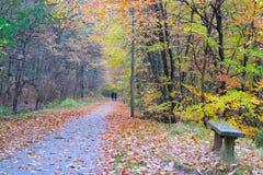 Δανικό δάσος φθινοπώρου το Νοέμβριο Viborg, Δανία Στοκ εικόνα με δικαίωμα ελεύθερης χρήσης