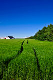 Δανικό τοπίο, αγρόκτημα και πεδίο χωρών Στοκ Εικόνα