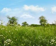 δαντέλλα της Anne wildflowers βασίλισ&sig Στοκ Φωτογραφίες