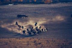 Δαπάνη του αλόγου (2) Στοκ εικόνα με δικαίωμα ελεύθερης χρήσης
