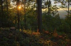 Δασικά δέντρα ηλιοβασιλέματος Στοκ Εικόνες