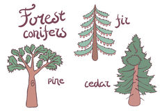 Δασικά δέντρα κωνοφόρων καθορισμένα σχέδιο Στοκ Εικόνες
