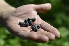 Δασικά δέντρα ομορφιάς φύσης σιωπής του Blackberry Στοκ φωτογραφία με δικαίωμα ελεύθερης χρήσης
